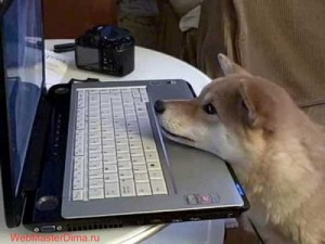 Canines-and-Laptops-12